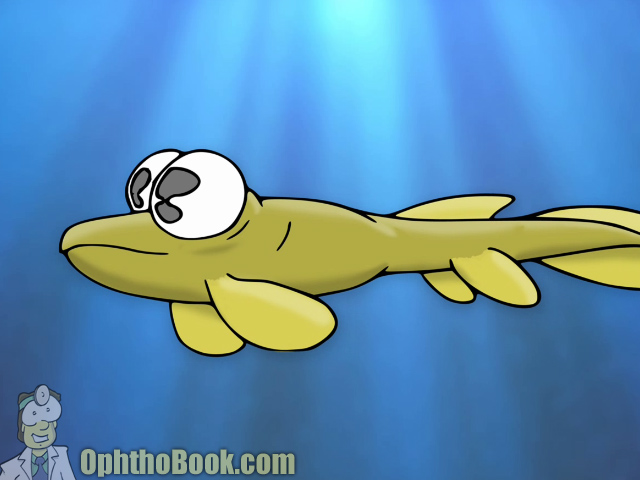 Anablep - 4 eyed fish