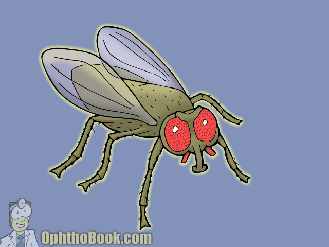 Fly - Compound Eye