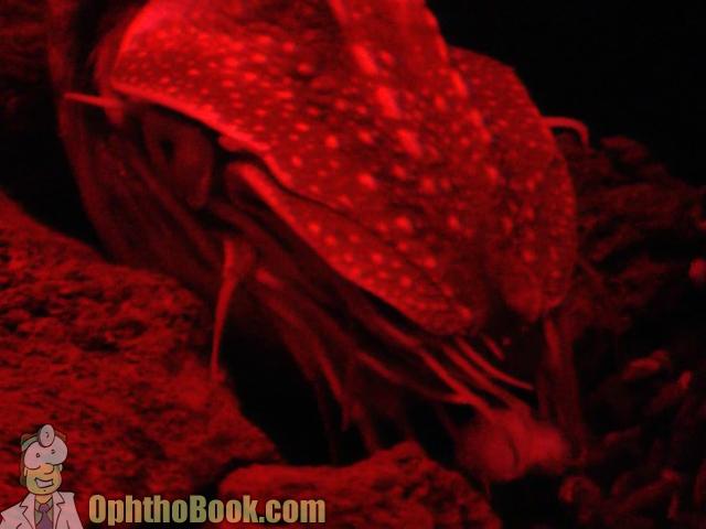 Nautilus in dark
