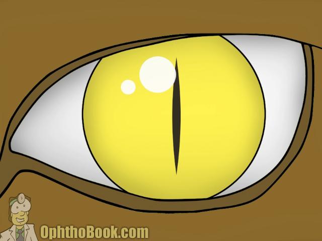 Alligator Pupil