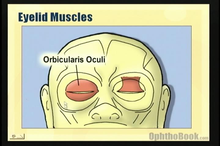 video-orbicularis.jpg
