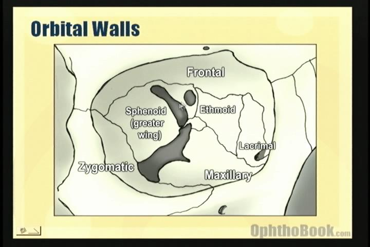 video-orbitalbones.jpg